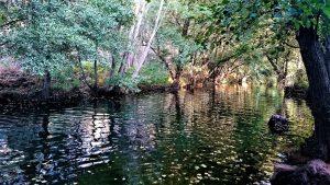 rio ibor agosto 2017 bohonal
