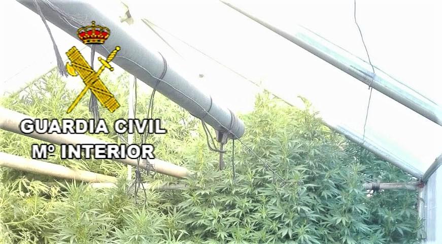 Tres detenidos por cultivar marihuana