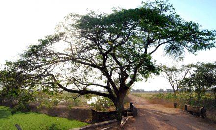 El camino recorre otros paisajes