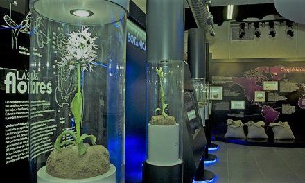 Almaraz y el Orchydarium estarán presentes en el Doñana Birdfair 2018