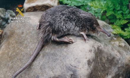 El deterioro del hábitat del topo de agua se salda con 2 detenidos en Aldeanueva de la Vera