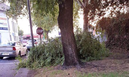 Una rama cae sobre la zona de tránsito peatonal en la calle Cartagena de Navalmoral