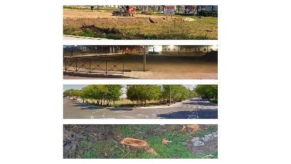 Unión del Pueblo Moralo denuncia tala de árboles en la instalación de la caseta
