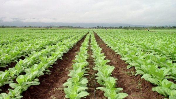 Vara reafirma su compromiso con el sector tabaquero y aboga por la innovación