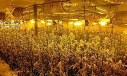 Detenidos siete vecinos de Talayuela, Cáceres y Miajadas por cultivo de marihuana