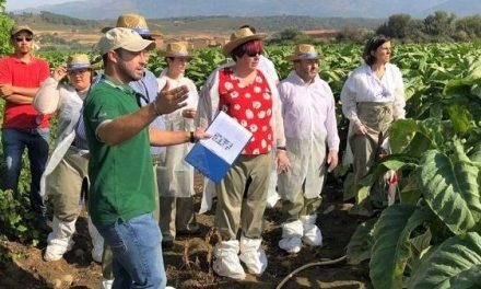 La consejera de Agricultura visita en Talayuela explotaciones tabaqueras que realizan ensayos de I+D+I