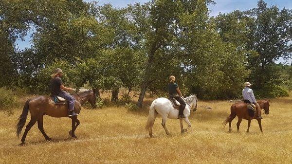 Mujer con traumatismo craneal tras caerse de un caballo en Jaraíz de la Vera