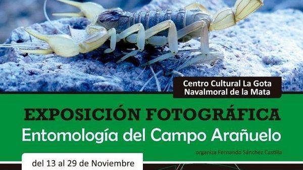 La Gota alberga una exposición fotográfica sobre entomología del Campo Arañuelo
