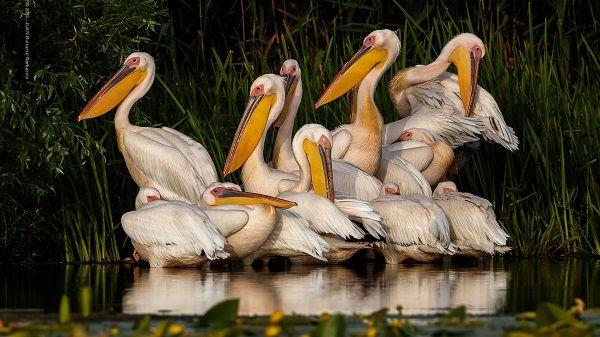 """XV Concurso Fotográfico de Naturaleza """"Las Aves Silvestres"""" de FIO 2020"""