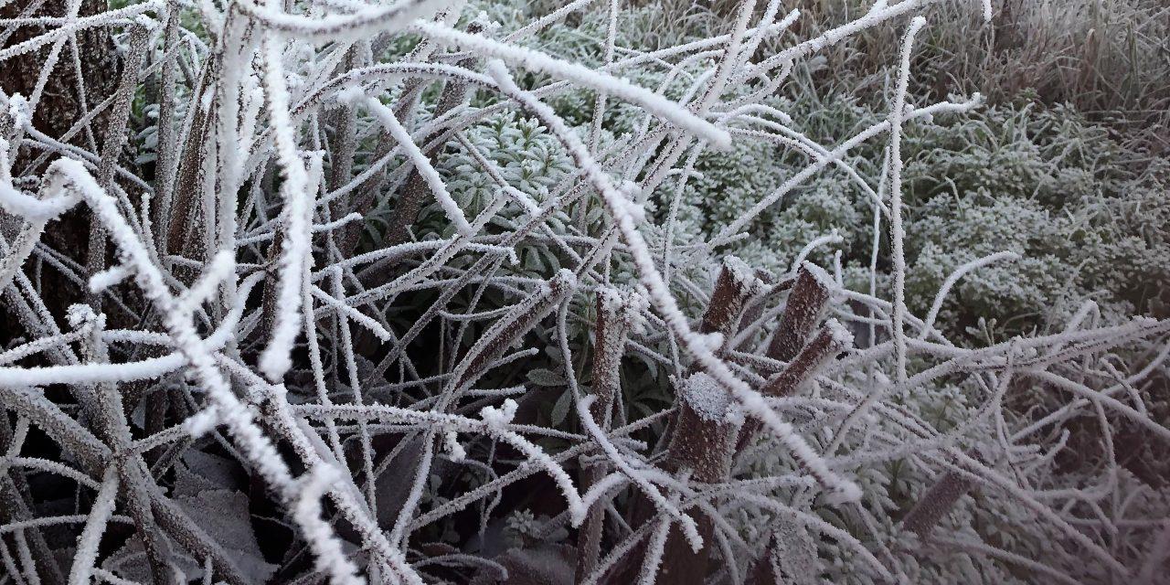 Navalmoral se congela a -5ºC durante la pasada madrugada