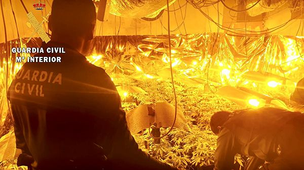 La Guardia Civil aprehende casi 40 plantas de marihuana de un piso en Navalmoral