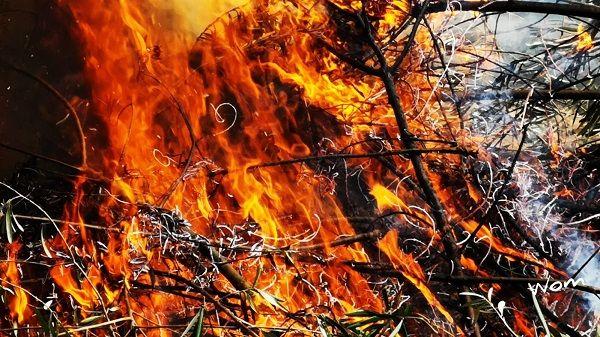 El Infoex destaca el incendio forestal de Viandar entre los 34 de la pasada semana en la región