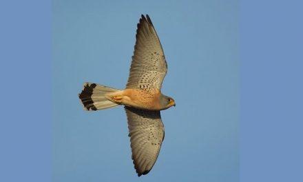 La Junta estará presente de nuevo en Birdfair la feria de turismo ornitológico más importante de Europa