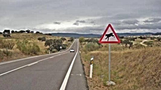 ¡Cuidado! ¡Paso de linces!, nueva señalización entre Peraleda de la Mata y Bohonal de Ibor