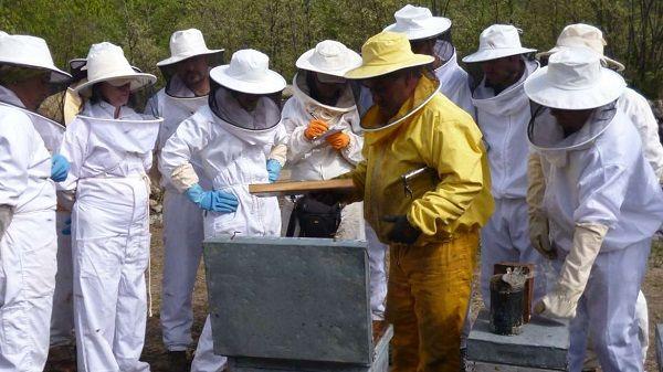 811 apicultores extremeños reciben más de 6,7M de euros correspondientes a la Política Agraria Comunitaria