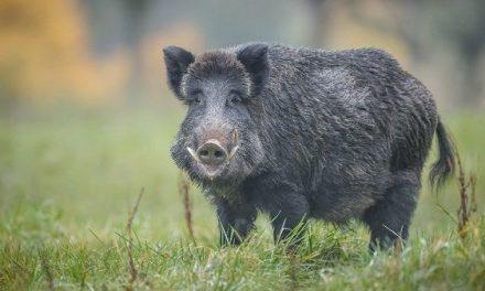 El sorteo de la oferta pública de caza en Extremadura será el 4 de marzo en Mérida