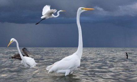 Garzas y tormenta, gana el premio absoluto del concurso de naturaleza FIO 2020