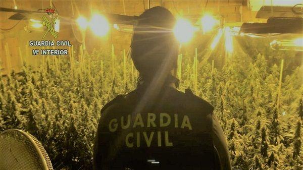 Un vecino de Pasarón, detenido al encontrarse en su domicilio casi 500 plantas de marihuana