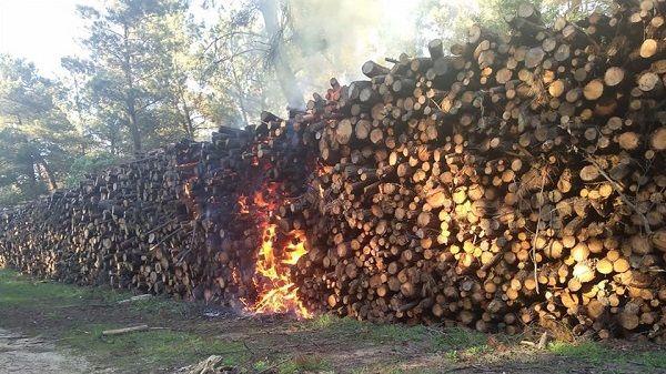 Prenden fuego al pinar de Talayuela