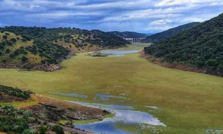 La Azolla Filiculoides invade el río Tajo en Monfragüe