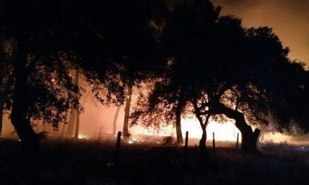 Arde el pinar del camino de acceso al Espadañal