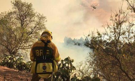 600 Ha de pasto y matorral han ardido esta semana en 29 incendios forestales