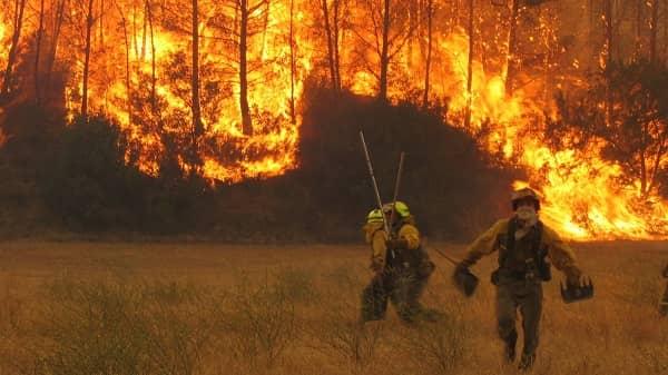 La superficie afectada por incendios forestales se reduce un 21% en 2020