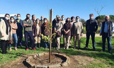 """Rosalejo y Tiétar plantan dos ejemplares de Olmo Iberico mediante el programa""""Plantea en Verde"""""""