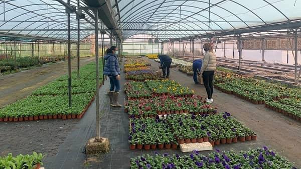 Diputación reparte a los municipios las plantas ornamentales de invierno