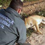 La Guardia Civil investiga a un hombre de Losar como supuesto autor demaltrato animal y tenencia ilícita de armas