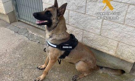 Un perro de la G. Civil previene la entrada de drogas en el Centro Penitenciario de Cáceres