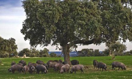 Los sectores porcino y equino se incorporan a los eco-esquemas de la futura PAC