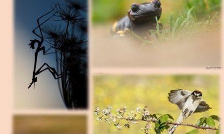 Abierta la inscripción para un curso de Fotografía de Naturaleza en el Centro de Educación Ambiental de Cuacos de Yuste