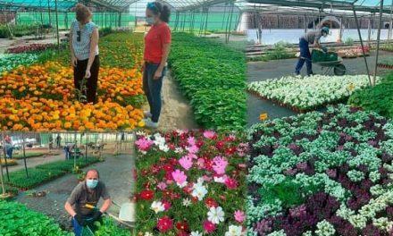 Los Ayuntamientos cacereños ya pueden solicitar las plantas de primavera 2021 a la Diputación