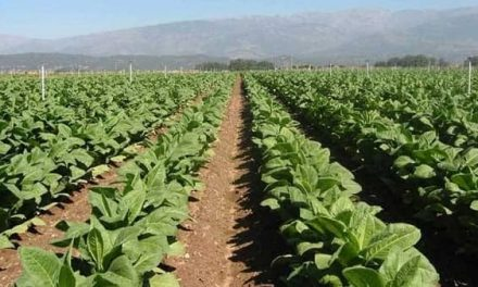 La Junta acredita a agricultores a título principal y a explotaciones agrarias prioritarias