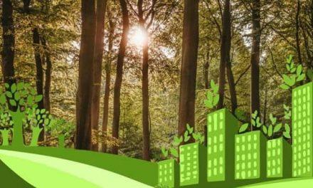 Creex organiza el webinario #EconomíaVerdeForestal sobre la importancia del sector forestal