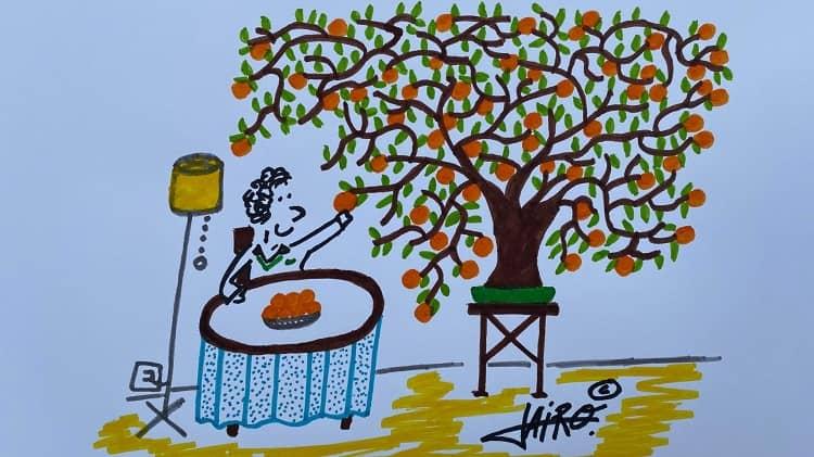 Naranjas – Las Viñetas de Jairo Jiménez