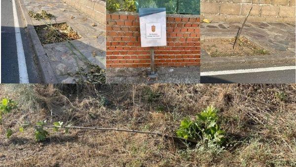 El Ayuntamiento de Carrascalejo denuncia destrozos en árboles y papeleras
