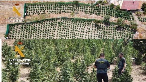 La Guardia Civil interviene en La Vera cerca de 1.200 plantas de marihuana