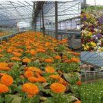 139 pueblos reciben 21.000 flores de la Diputación de Cáceres